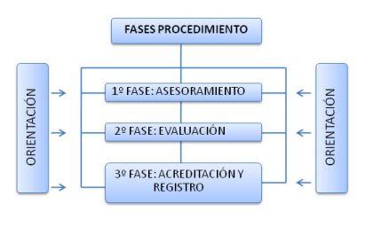 fases_procedimiento